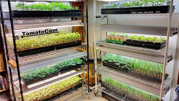 grow lights2